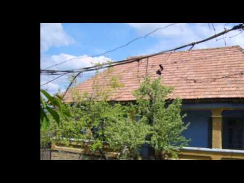 Vasilisia Lazăr Grădinariu - Regăsire