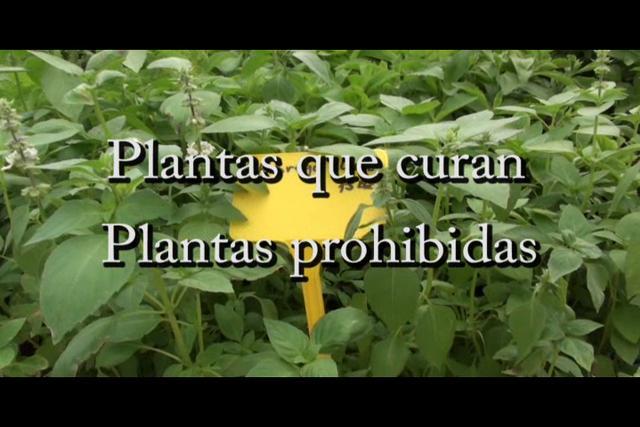 Plantas que curan, plantas prohibidas (con Josep Pàmies)