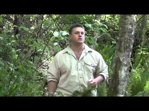 NatureGuy_Talks Herbal Papaya Discovery