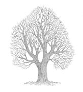 tree_doodle_XIII