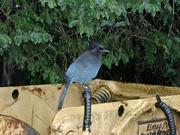 503_Bluebird_4
