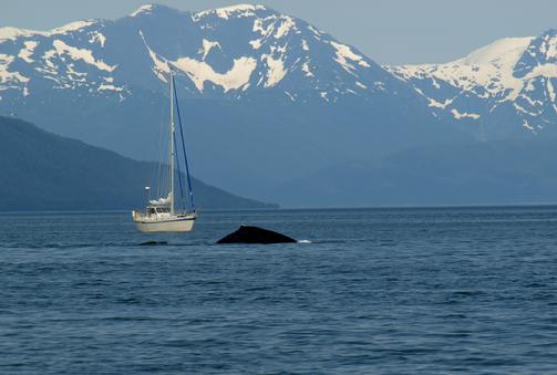 503_Sailboat_with_dorsal_fin