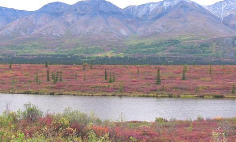Tundra area just south of Fairbanks 2008