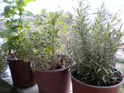 """Εργαστήρι: """"Οικολογική & Βιολογική Καλλιέργεια, Καλλιέργεια Αρωματικών φυτών"""" / Workshop: """"Ecological & Organic Agriculture, Growing Aromatic Plants"""""""