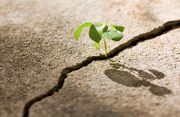 Transformation & Self-Growth - CLARITY