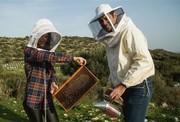 Workshop on beekeeping / Σεμινάριο μελισσοκομίας