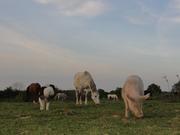 Lola, Bouffe en het paardenspul