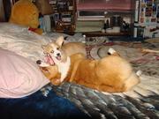 Sid & Cloe