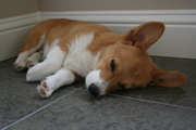 Oh So Tired