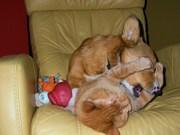 Where did kitty go???