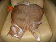 Pretzel Kitties
