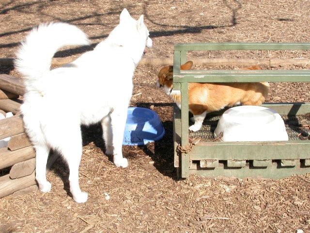 dog park 02-02-08