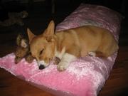 Sleeping Mochi