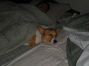 Snooze Corgi
