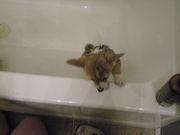 9 weeks and a bath 065