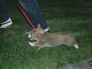 Owen the Bunny