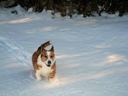 Butter Running in the Snow