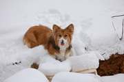 Likes eating snow