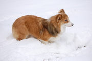 Handsome in the snow