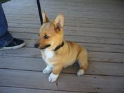 Baby Roxy