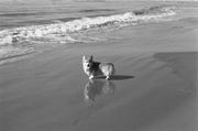 Heronsway Land of the Hokies - at the beach