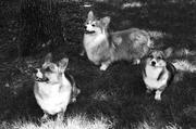 Bear, Linus and Tasha Girl