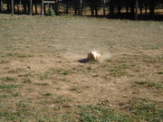 Bear's Favorite Herding Position