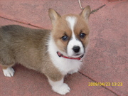 2009 Puppies