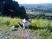 Frodo, hiking in Santa Teresa County Park