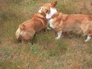 Owen finds a friend