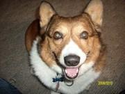 Smiley Riley