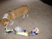 Fox's 1st Birthday 8-21-10 008