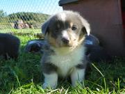 pups out door 5weeks 031