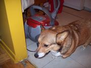 huuumm i m not sure about this vacuum cleaner