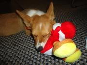Yoshis napping