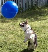 Bailey and the Blue Ball