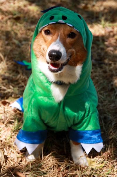 Run.. it's Dogzilla!