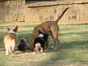Zombie visits Dog Park