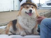 Captain Elvis