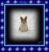 Herky FINALLY gets some snow!