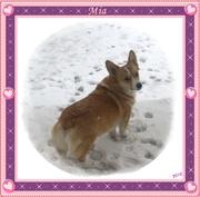 Mia FINALLY gets some snow!
