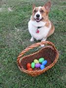 Easter 2012: Dewey's Doggie Treat Easter Egg Hunt