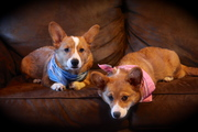 <3 Indy & Penny <3