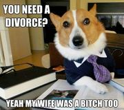 you-need-a-divorce-lawyer-dog