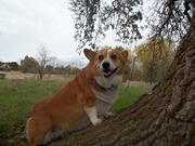 Daisy and The Oak Tree.