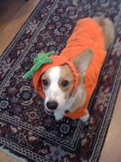 Halloween humiliation