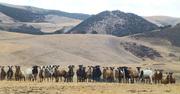 P1030191_sheeps_eah