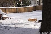 Emma chasing her mom
