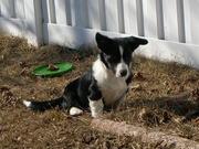 Oscar, 5 months