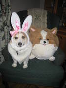 Corgi Bunny